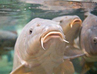 KWO Rotary – Analyse van aasgedrag op onderwaterbeelden