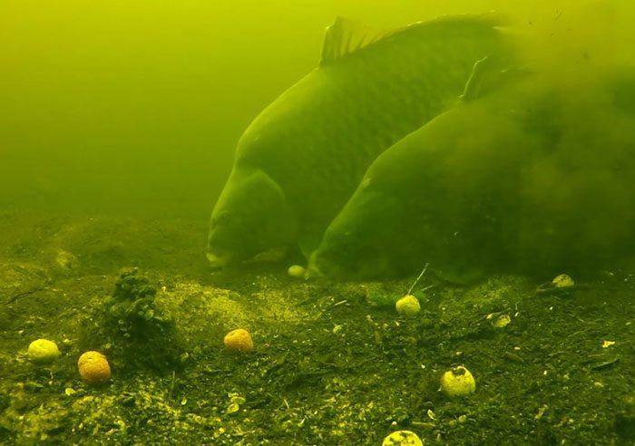 Maak jij in 2016 zelf zulke onderwaterbeelden? Het kan met de Jeffish Onderwatercamera.