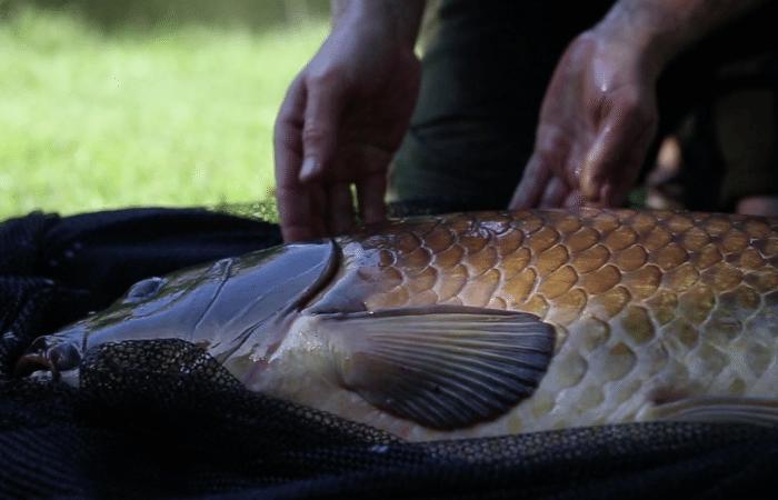 Hoe land en weeg je een vis correct & veilig? – KWO How To Video