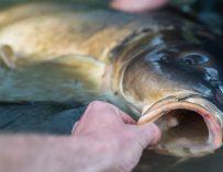 Membervraag: Hoe vis je het effectiefst op een modderbodem? – Willem Kwinten