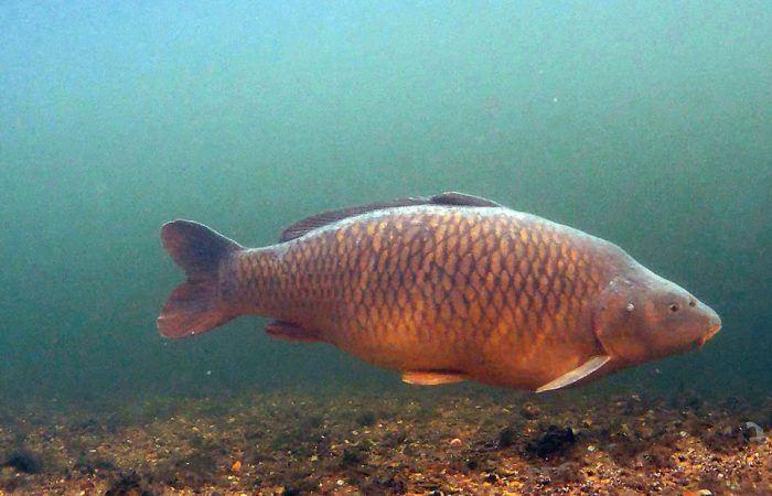 4 voordelen van het vissen met een onderwatercamera – Ronald Nijhoff – Deel 1
