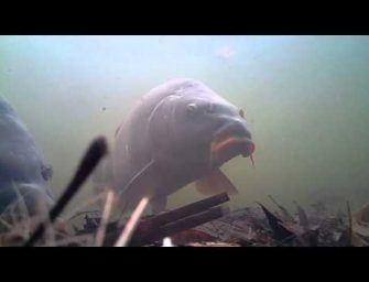 Karper gehaakt voor de Water Wolf Camera
