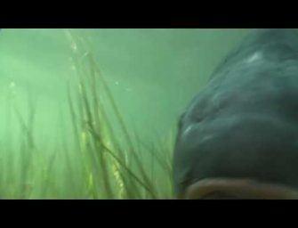 Franse onderwaterbeelden