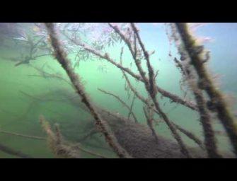Karpers gespot tijdens het snorkelen