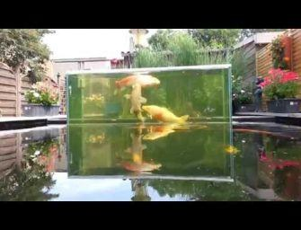 Koi vijver inclusief aquarium