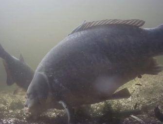Jeffish Onderwater compilatie – Grote karpers voor het oog van de lens!