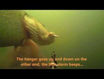 Bizarre onderwaterbeelden: snoek maakt roadtrip