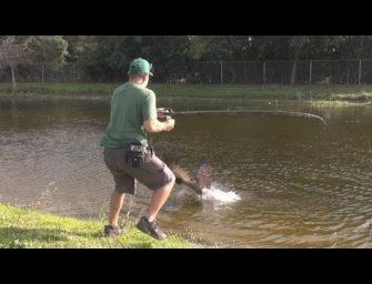 Bizar: Roofvogel valt vis aan!