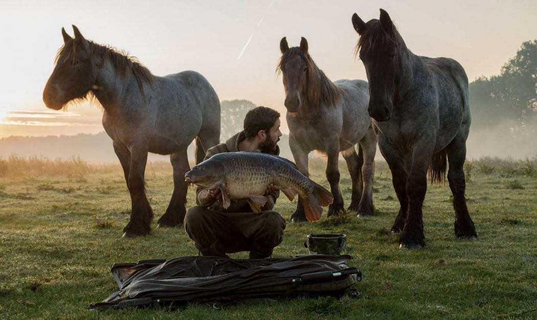 justin-hulswit-karakterschub-drie-nieuwsgierige-paarden-boulevard-header