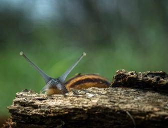 Grootse kleine beesten – Macrofotografie met Roel den Boer