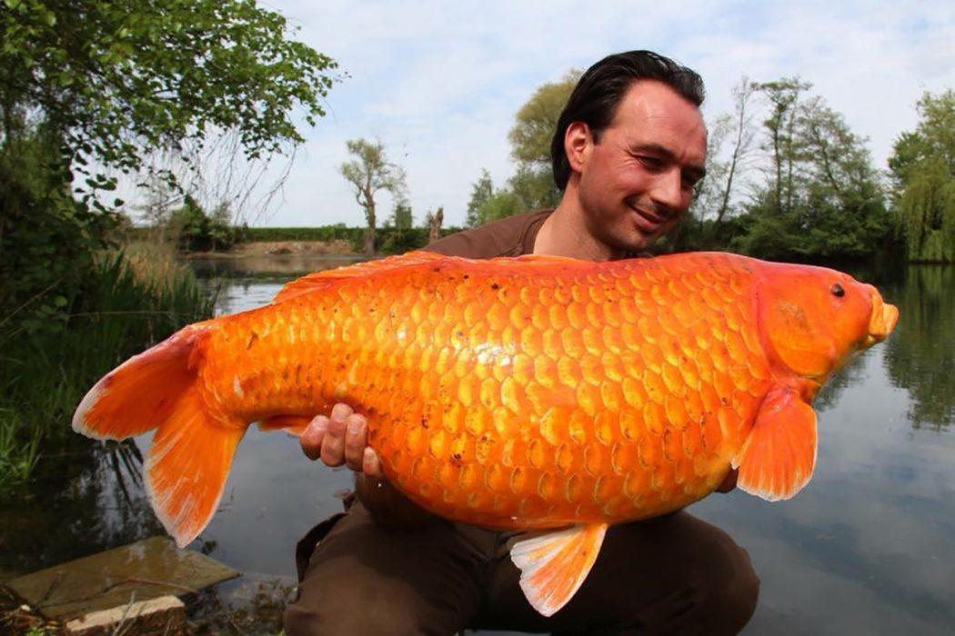 mark-pansar-gouden-vangst