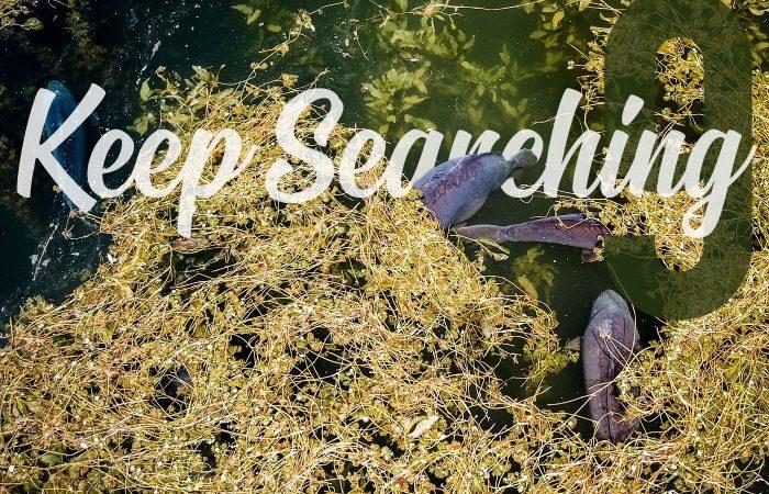 Keep Searching – Part 9 – Mark Hofman