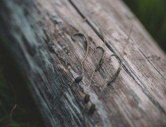 I LOVE BIG CARP # 7 – Rigs voor GROTE karpers – Jelle Eshuis
